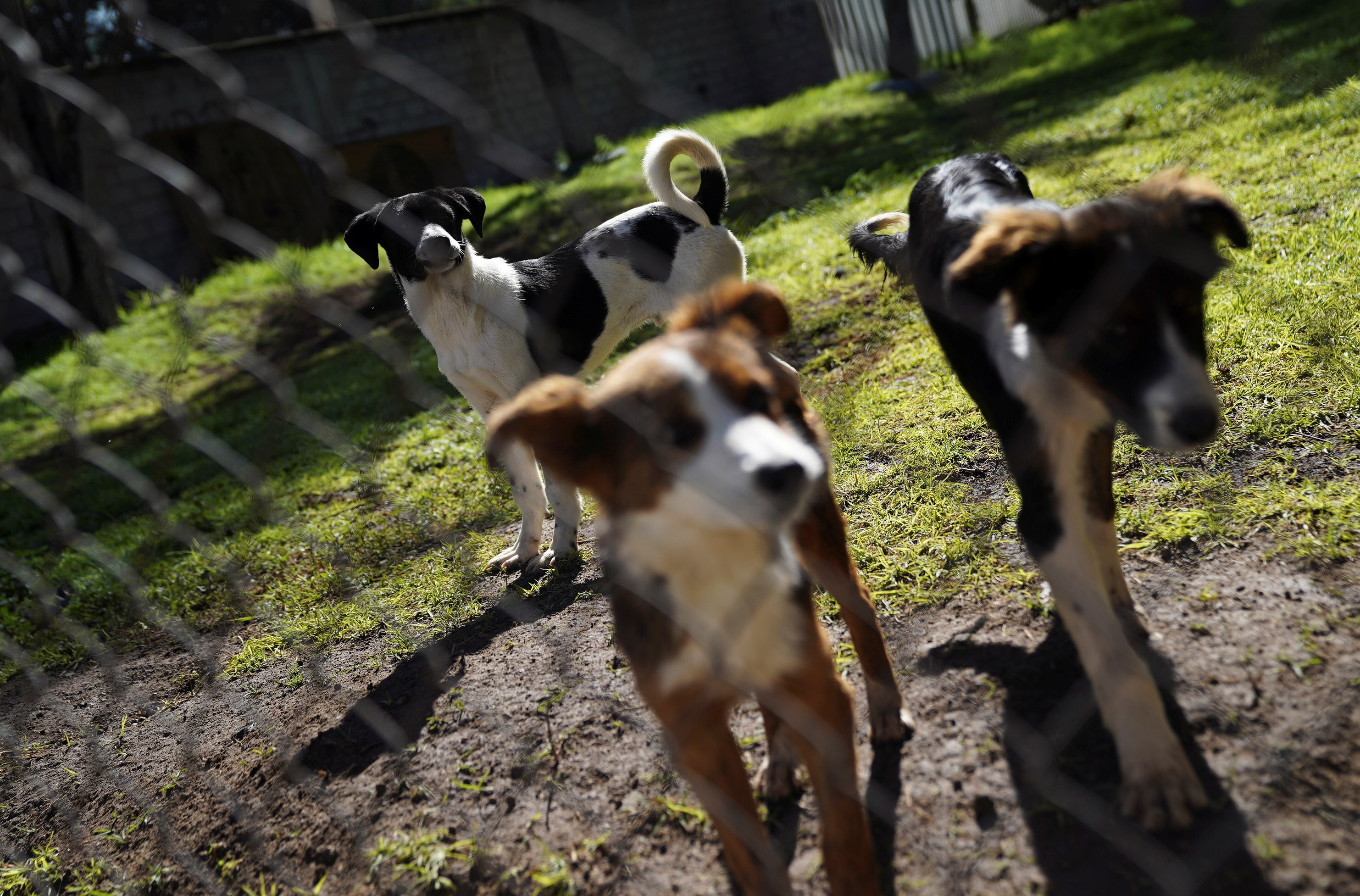 Street dogs find homes, vocations after being rescued by Mexican army
