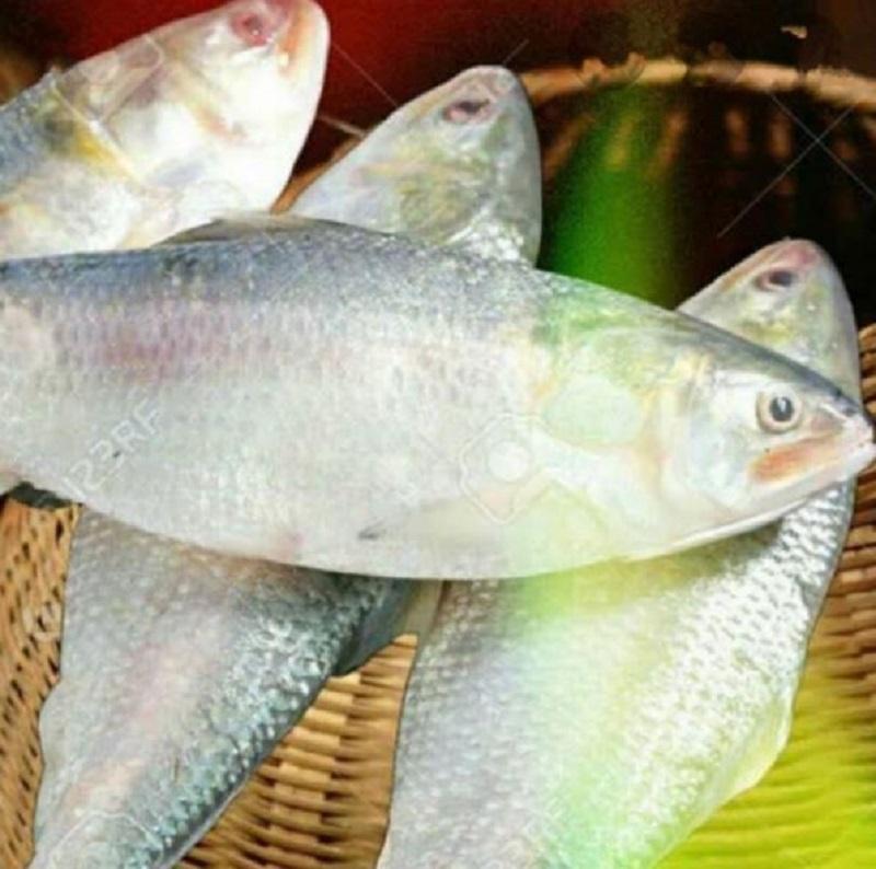 Bangladesh to export 2080 MT Hilsa fish to India