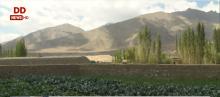 लद्दाख में कृषि को पूरी तरह पेस्टीसाइड फ्री बनाने की दिशा में तेज़ी से कार्य जारी