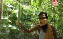 झारखंड के पूर्वी सिंहभूम मेंयुवा कर रहे अत्याधुनिक विधि से सब्जी उत्पादन