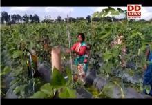 रांची में सामूहिक खेती के जरिए विकास की ओर बढ़ रही महिलाएं