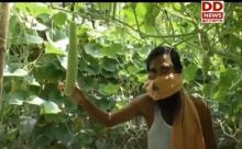 आत्मनिर्भर भारत अभियान : युवा कर रहे अत्याधुनिक विधि से सब्जी का उत्पादन