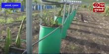 आत्मनिर्भर भारत : गुजरात के अमरेली में किसान नवीन वृक्षारोपण तकनीक से बढ़ा रहे आमदनी
