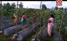 आत्मनिर्भर भारत अभियान : सामूहिक खेती के जरिए विकास की ओर बढ़ रही महिलाएं