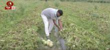 उत्तर प्रदेश के बाराबंकी में सामाजिक दूरी के नियमों का पालन करते हुए खेती के काम में जुटे किसान