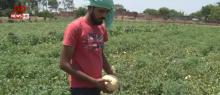 युवा किसान सरकारी योजनाओं का लाभ उठा कर कर रहे हैं खेती