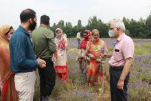 Dr. Shekhar Mande, DG-CSIR visits J&K;  takes stock of CSIR's Lavender Cultivation at Pulwama