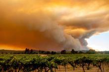 कैलिफोर्निया के जंगलों में भीषण आग