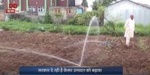 भारत सरकार दे रही है केसर उत्पादन को बढ़ावा