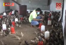 कटनी के युवक विमल इंजीनियर की नौकरी छोड़कर रंगीन मुर्गी चूजों का व्यवसाय कर बने आत्मनिर्भर